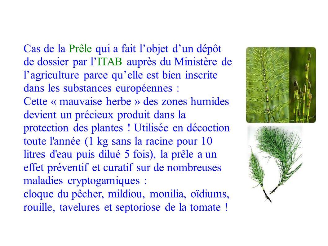 Cas de la Prêle qui a fait l'objet d'un dépôt de dossier par l'ITAB auprès du Ministère de l'agriculture parce qu'elle est bien inscrite dans les substances européennes : Cette « mauvaise herbe » des zones humides devient un précieux produit dans la protection des plantes .