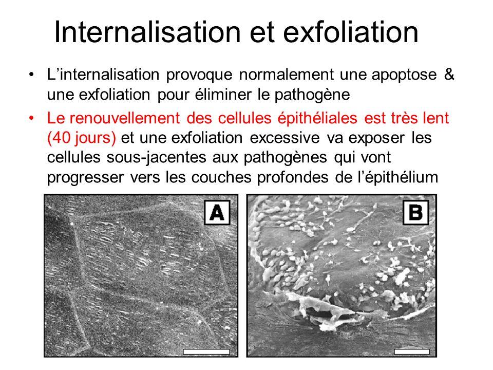 Internalisation et exfoliation