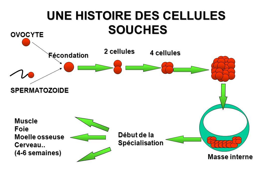 UNE HISTOIRE DES CELLULES