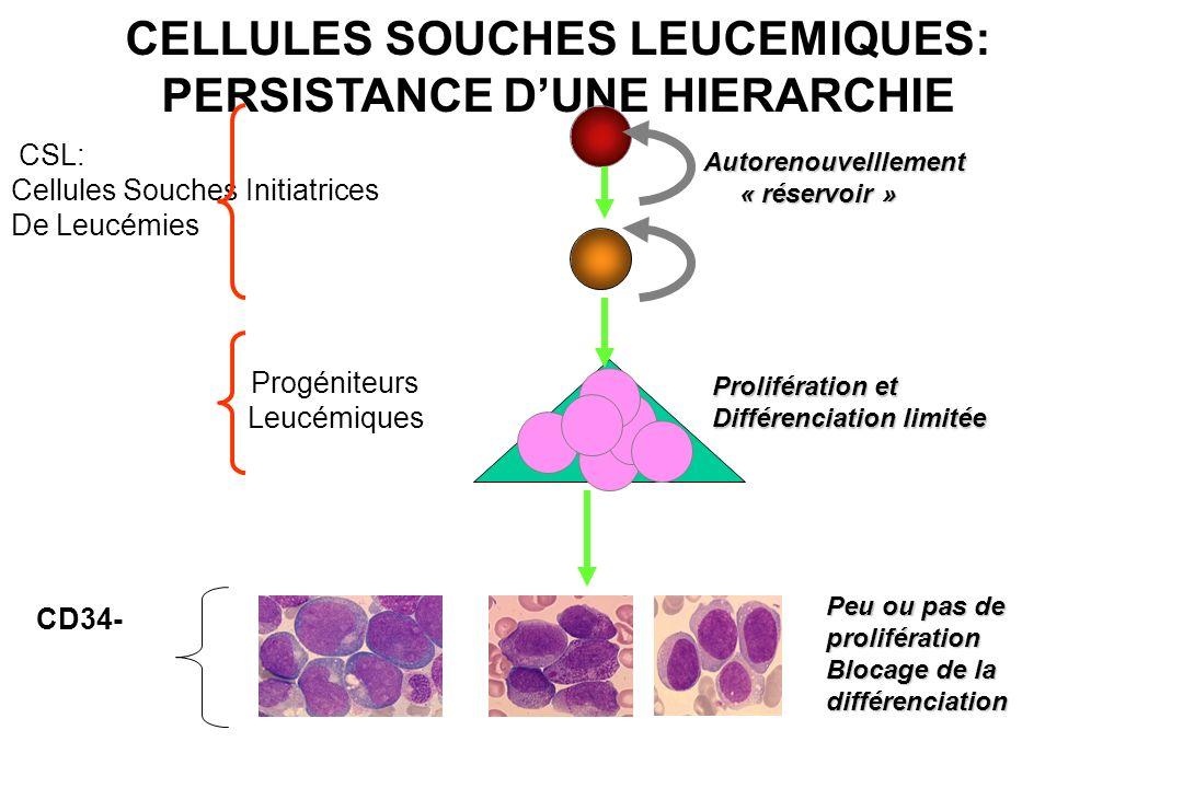 CELLULES SOUCHES LEUCEMIQUES: PERSISTANCE D'UNE HIERARCHIE