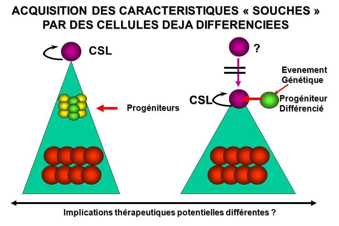 ACQUISITION DES CARACTERISTIQUES « SOUCHES » PAR DES CELLULES DEJA DIFFERENCIEES