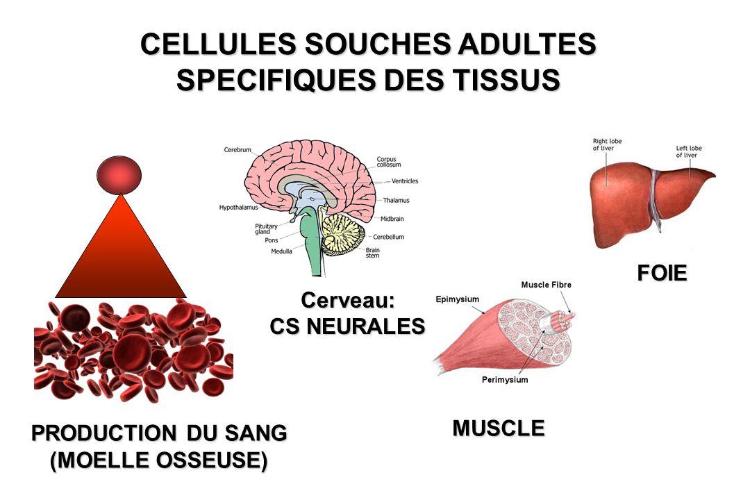 CELLULES SOUCHES ADULTES SPECIFIQUES DES TISSUS