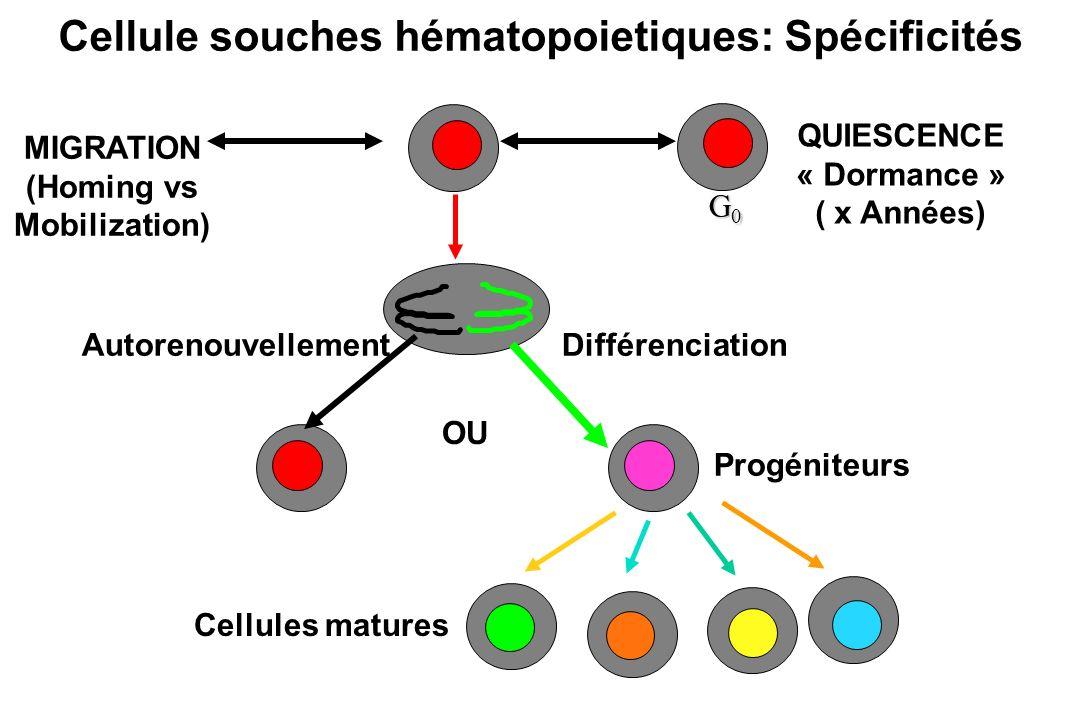 Cellule souches hématopoietiques: Spécificités