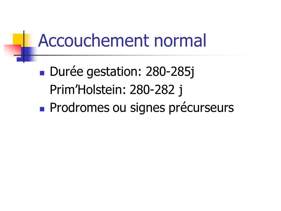 Accouchement normal Durée gestation: 280-285j Prim'Holstein: 280-282 j