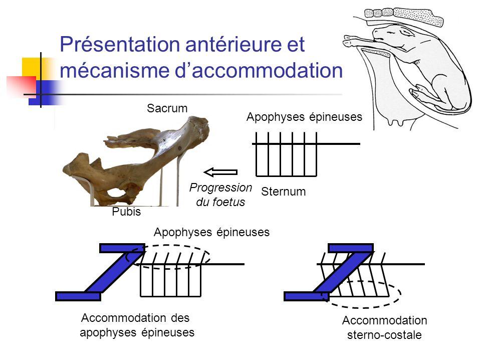 Présentation antérieure et mécanisme d'accommodation