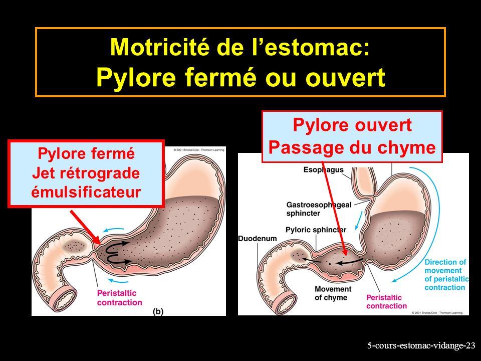 Motricité de l'estomac: Pylore fermé ou ouvert