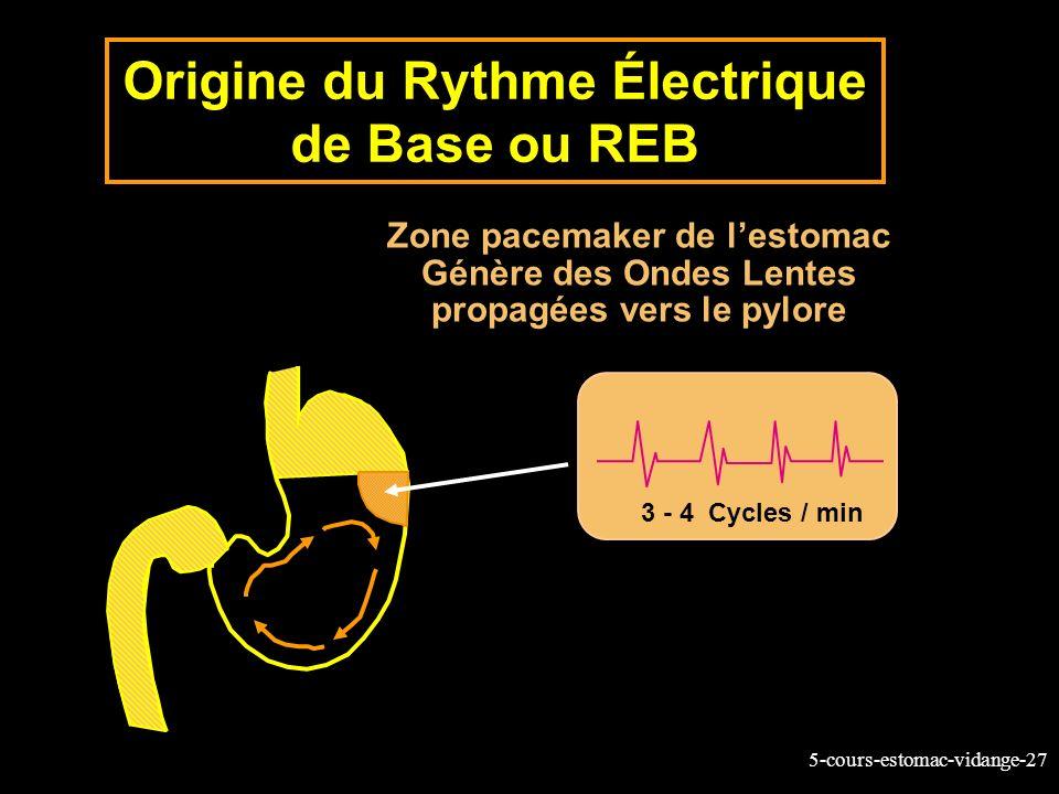 Origine du Rythme Électrique de Base ou REB