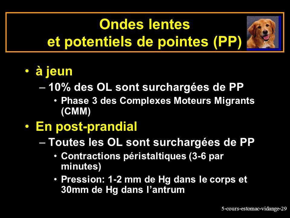 Ondes lentes et potentiels de pointes (PP)