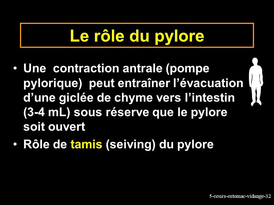 Le rôle du pylore