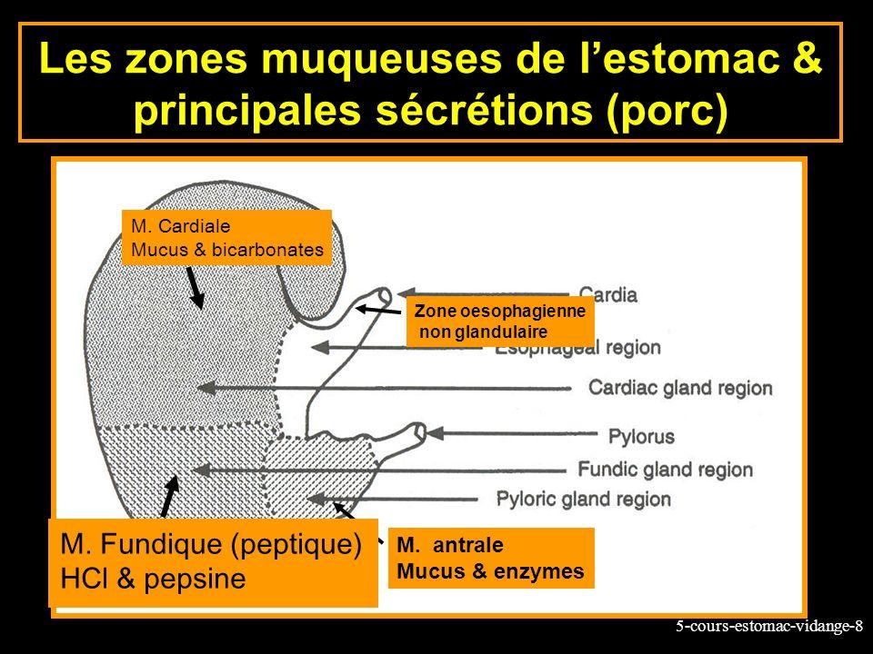 Les zones muqueuses de l'estomac & principales sécrétions (porc)