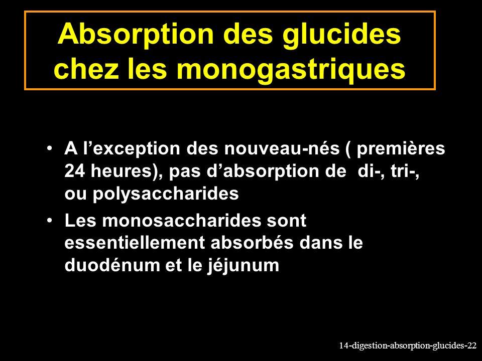 Absorption des glucides chez les monogastriques