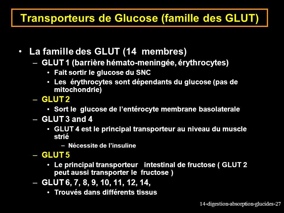 Transporteurs de Glucose (famille des GLUT)