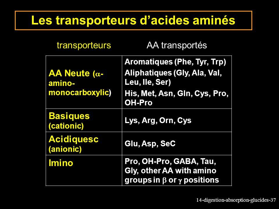Les transporteurs d'acides aminés