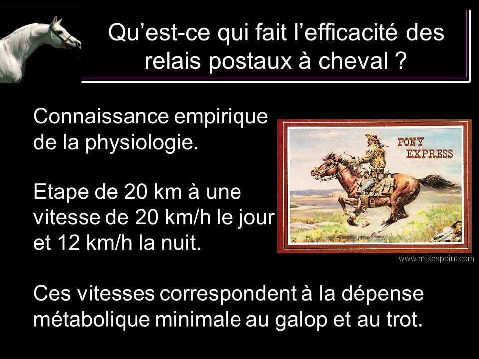 Qu'est-ce qui fait l'efficacité des relais postaux à cheval