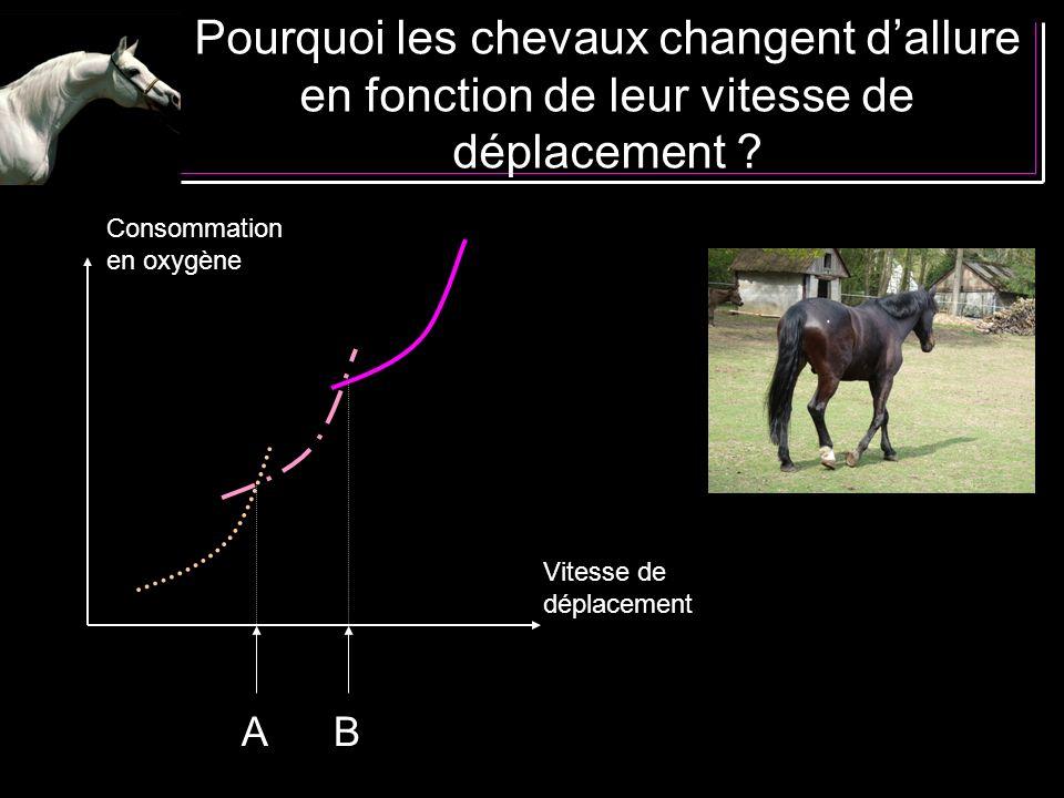 Pourquoi les chevaux changent d'allure en fonction de leur vitesse de déplacement