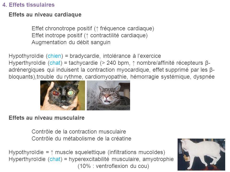 4. Effets tissulaires Effets au niveau cardiaque. Effet chronotrope positif (↑ fréquence cardiaque)