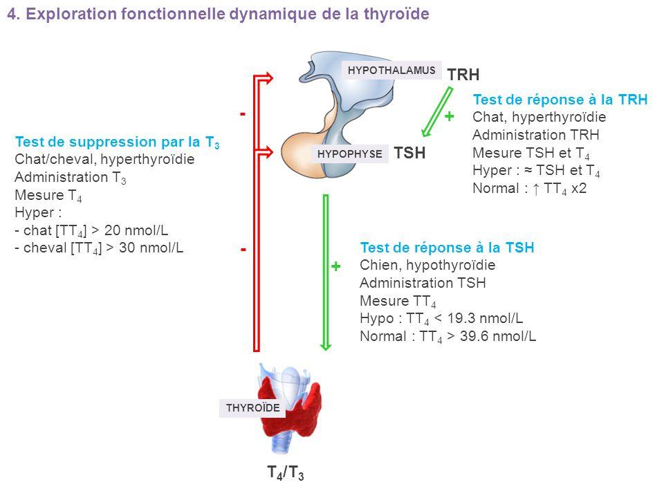 - + - + 4. Exploration fonctionnelle dynamique de la thyroïde TRH TSH