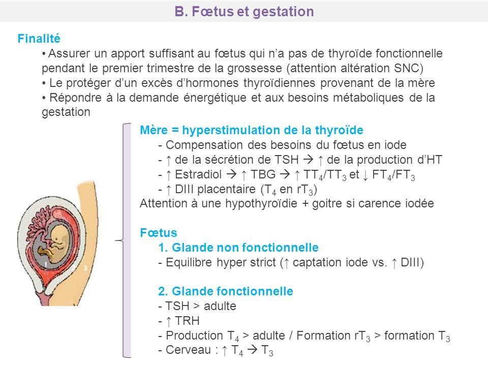 B. Fœtus et gestation Finalité