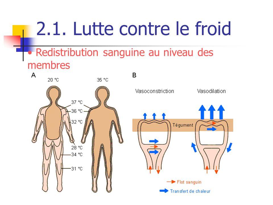 2.1. Lutte contre le froid Redistribution sanguine au niveau des membres