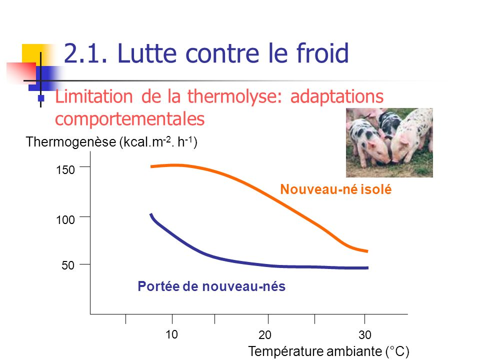 2.1. Lutte contre le froid Limitation de la thermolyse: adaptations comportementales. Thermogenèse (kcal.m-2. h-1)