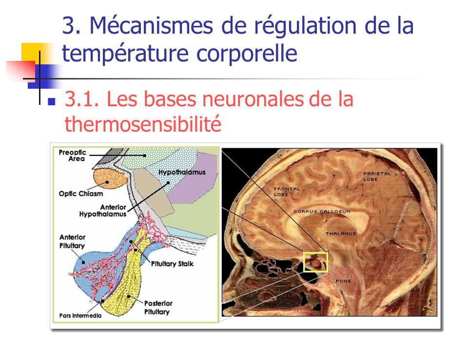 3. Mécanismes de régulation de la température corporelle