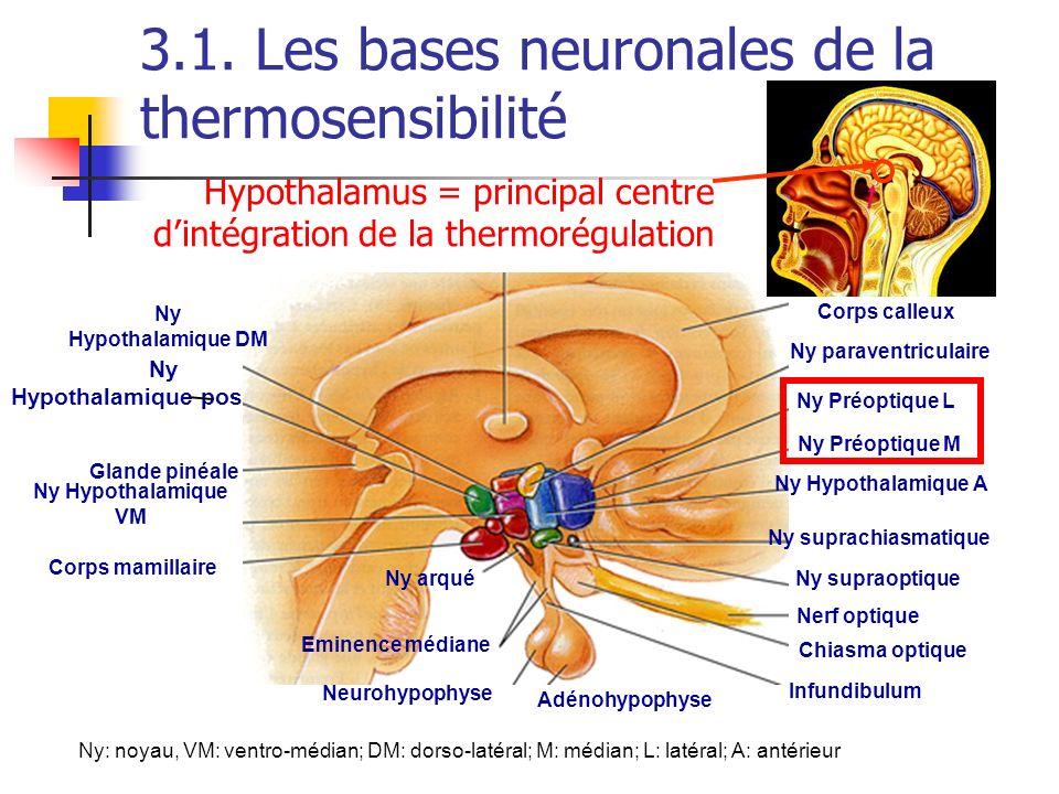 3.1. Les bases neuronales de la thermosensibilité