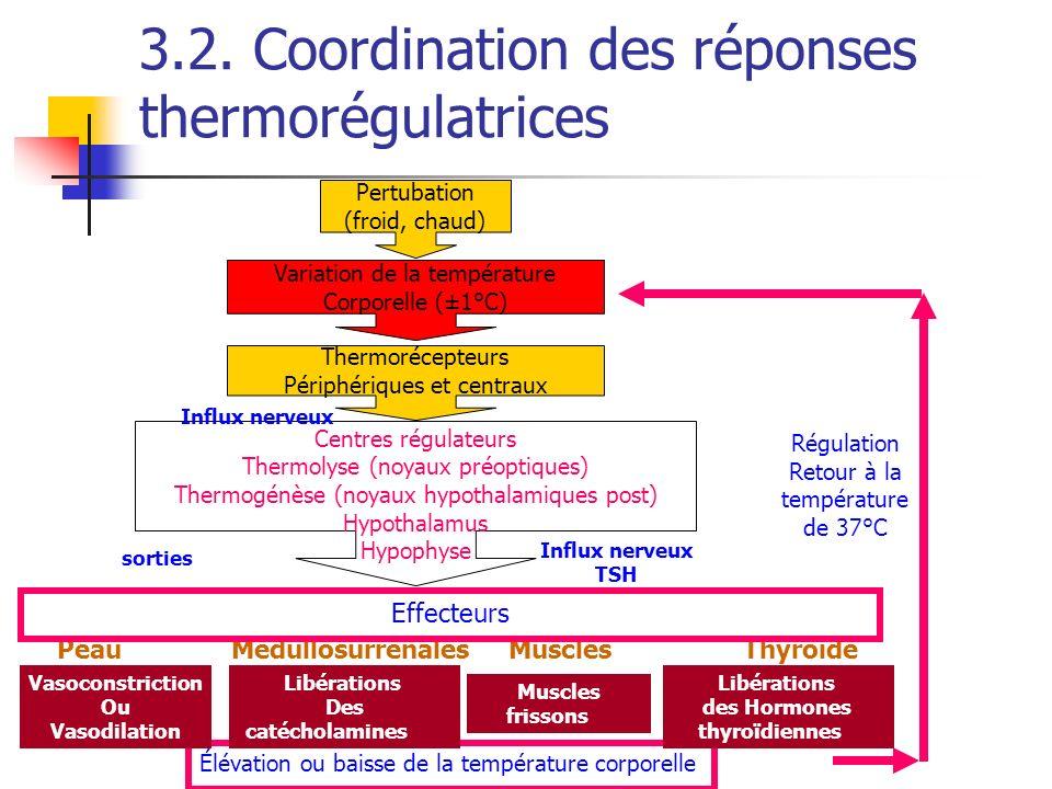3.2. Coordination des réponses thermorégulatrices