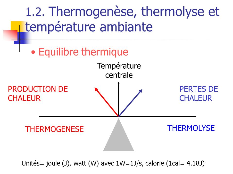 1.2. Thermogenèse, thermolyse et température ambiante