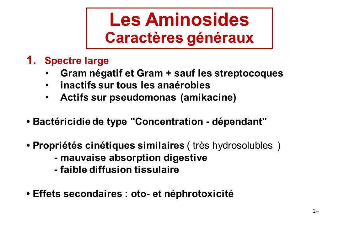 Les Aminosides Caractères généraux Spectre large