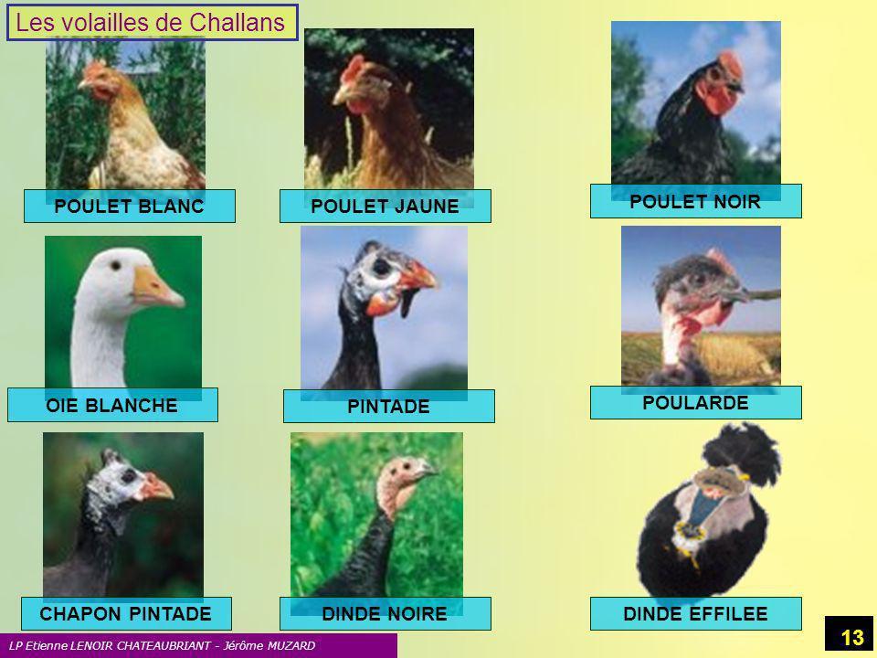 Les volailles de Challans