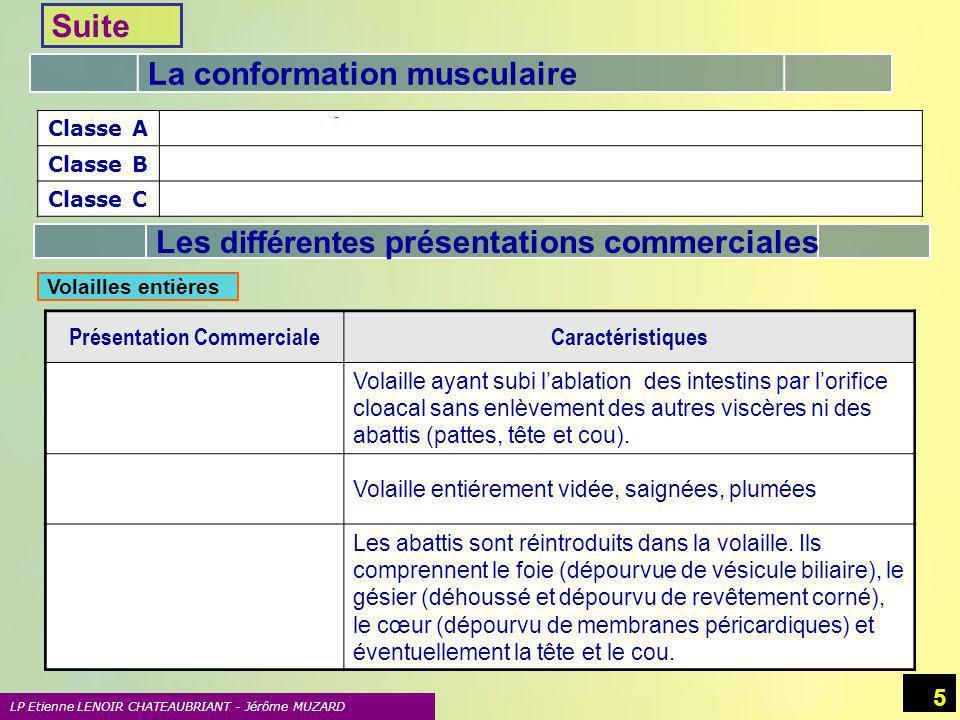La conformation musculaire