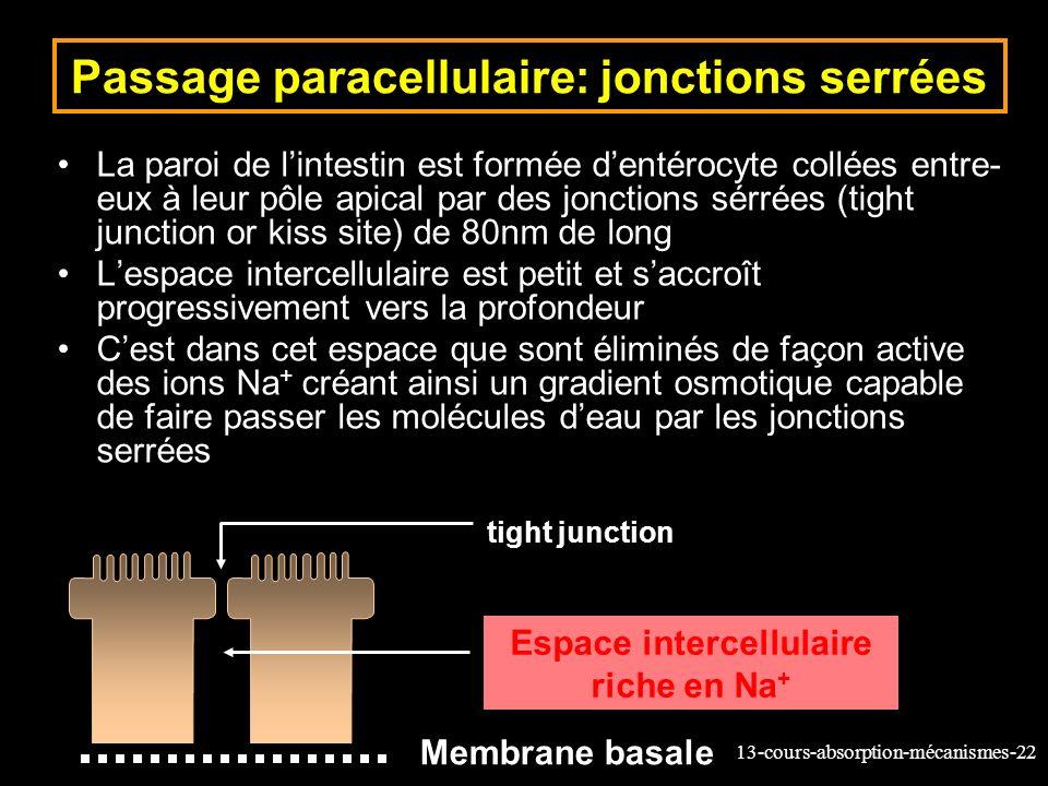 Passage paracellulaire: jonctions serrées