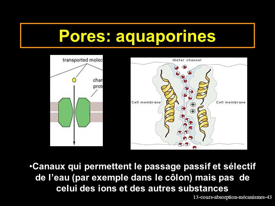 Pores: aquaporines