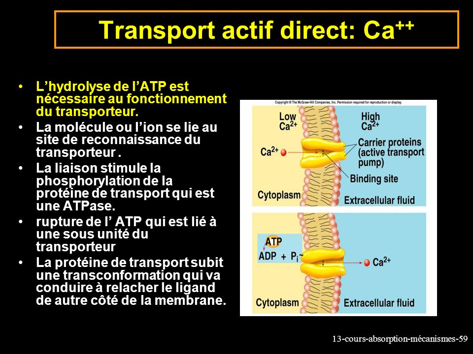 Transport actif direct: Ca++