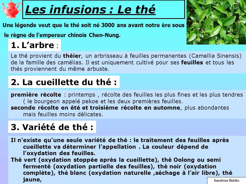 Les infusions : Le thé 1. L'arbre : 2. La cueillette du thé :