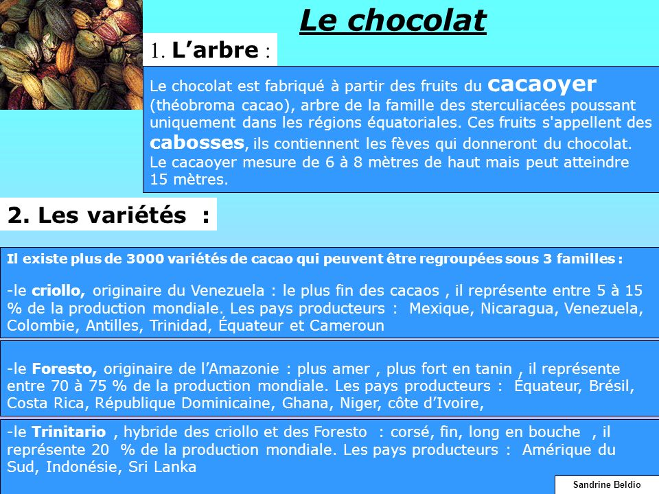 Le chocolat 1. L'arbre : 2. Les variétés :