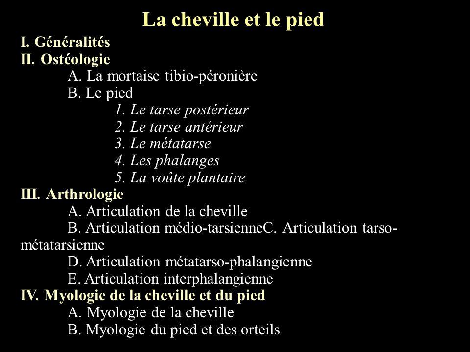 La cheville et le pied I. Généralités II. Ostéologie