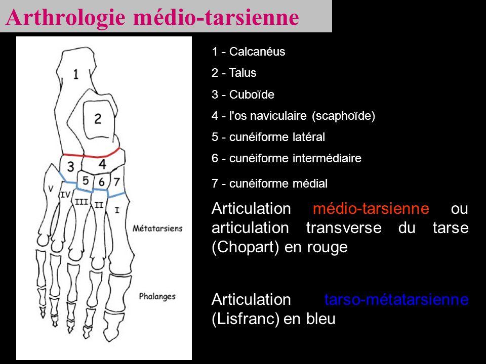 Arthrologie médio-tarsienne