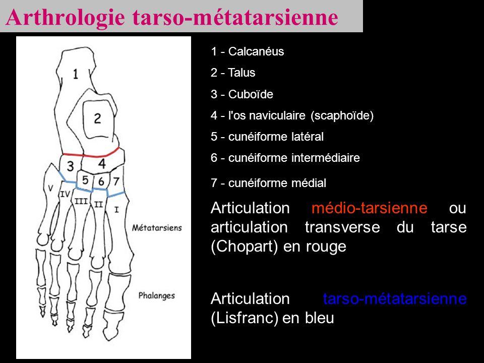 Arthrologie tarso-métatarsienne