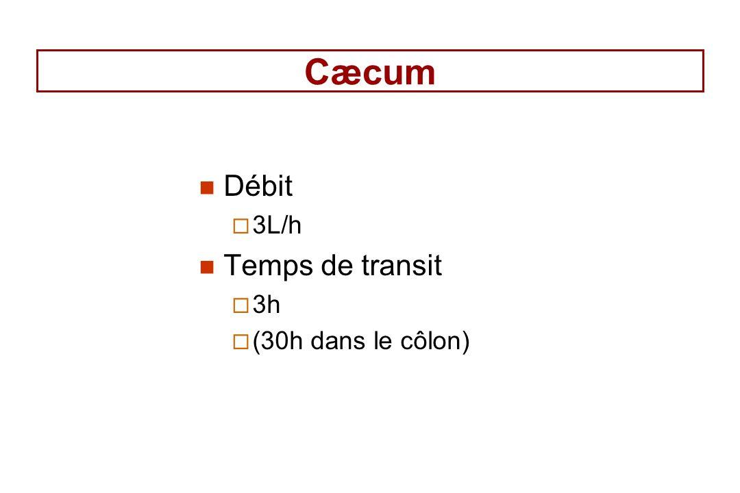 Cæcum Débit 3L/h Temps de transit 3h (30h dans le côlon)
