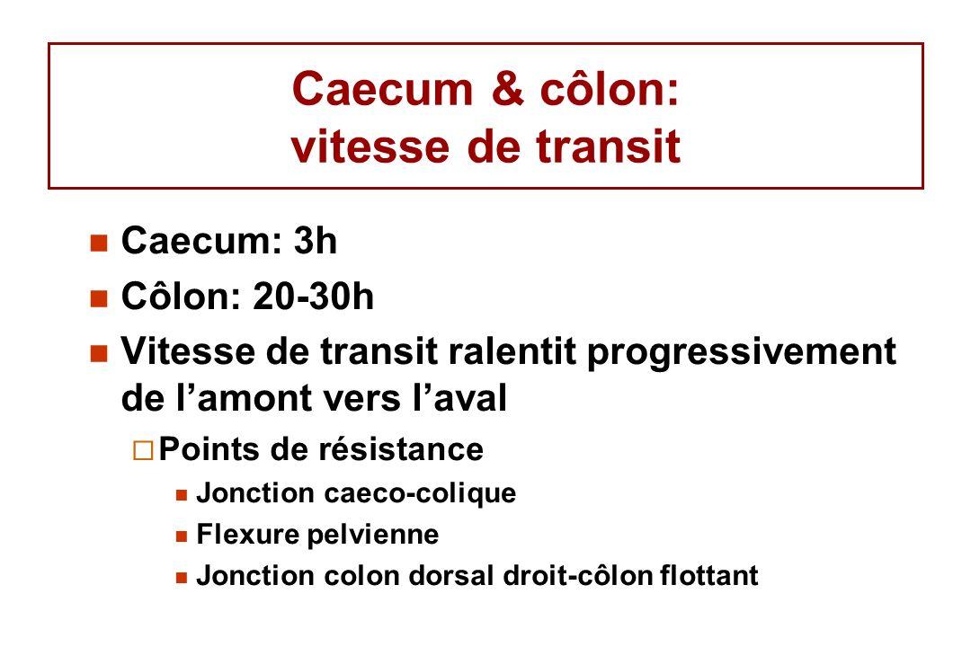 Caecum & côlon: vitesse de transit
