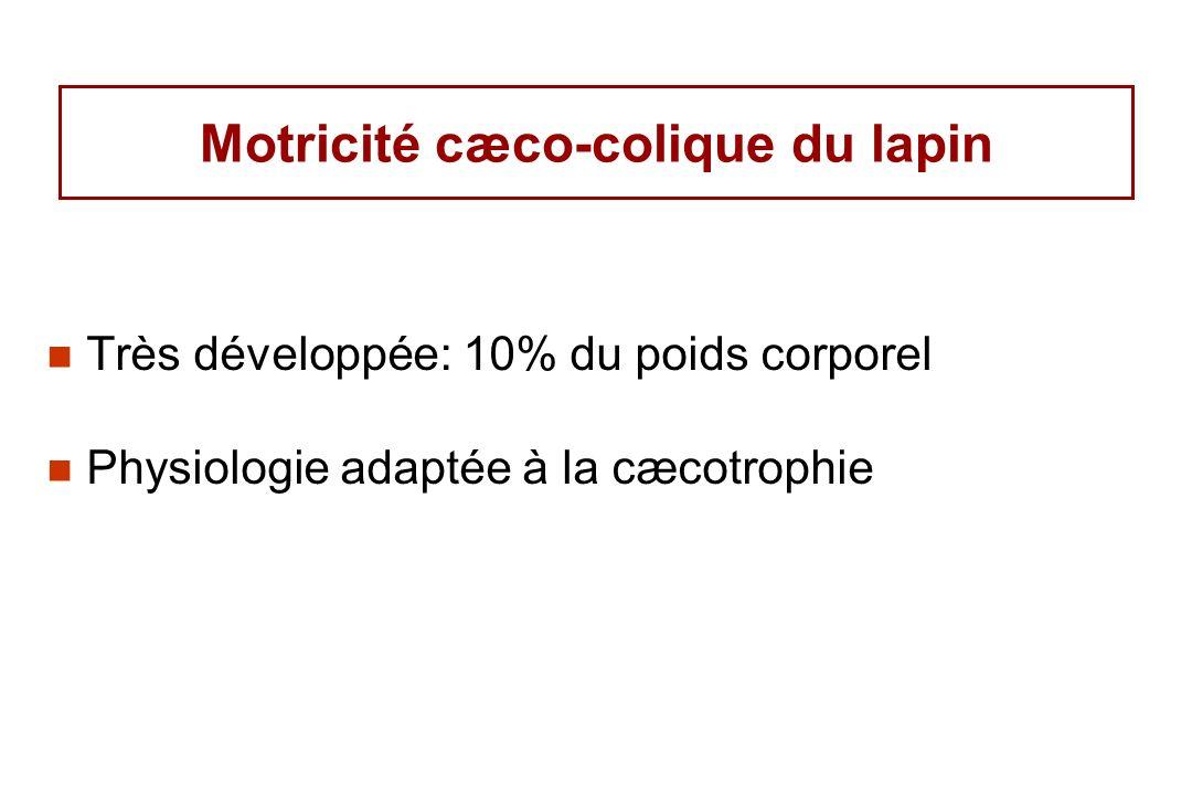 Motricité cæco-colique du lapin
