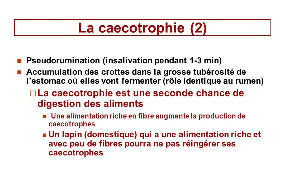 La caecotrophie (2) Pseudorumination (insalivation pendant 1-3 min)
