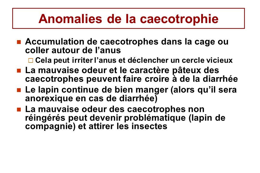 Anomalies de la caecotrophie