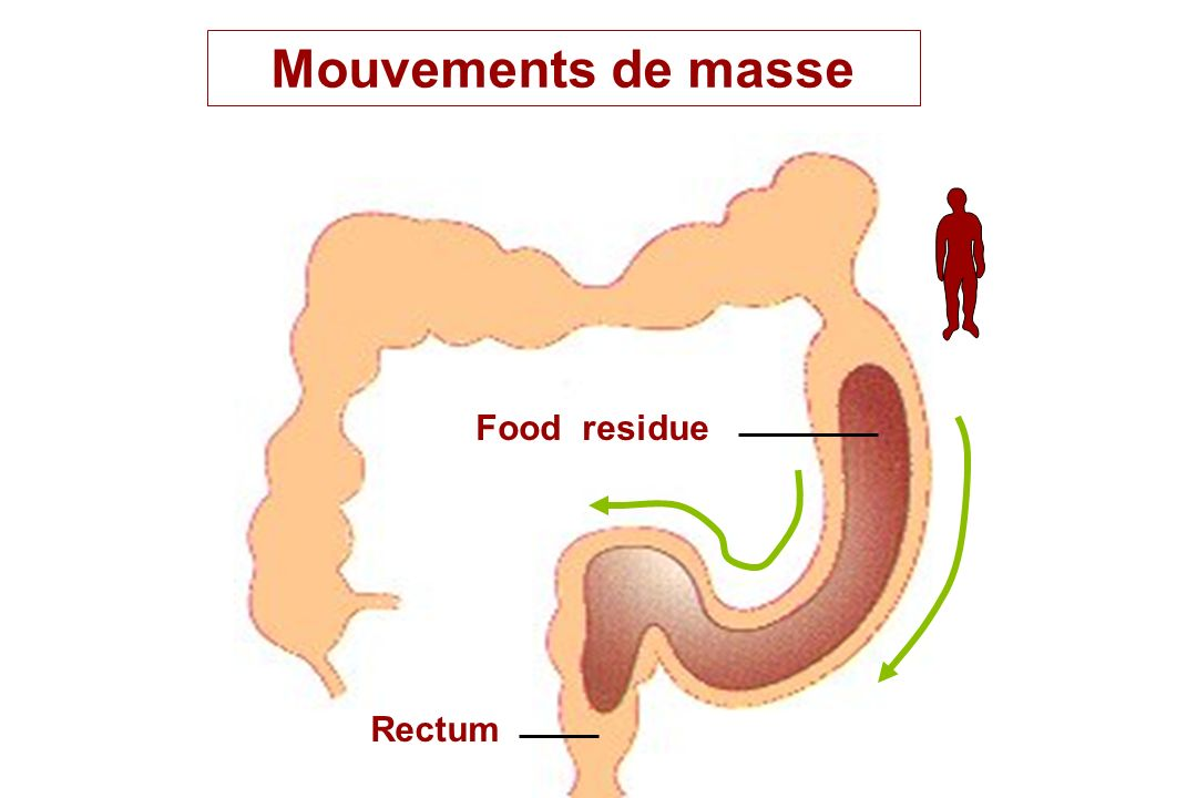 Mouvements de masse Food residue Rectum