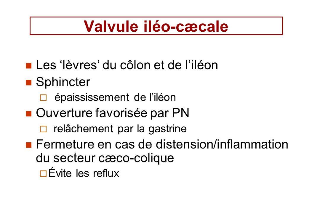 Valvule iléo-cæcale Les 'lèvres' du côlon et de l'iléon Sphincter