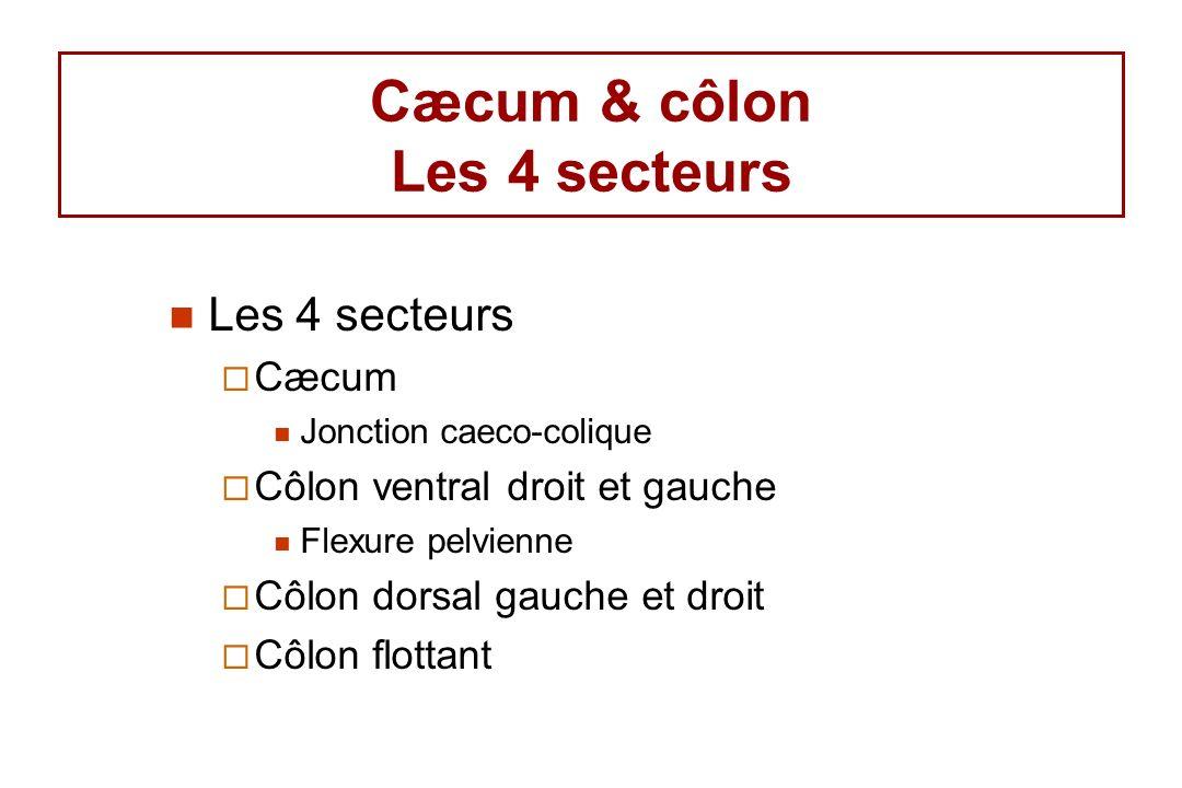 Cæcum & côlon Les 4 secteurs