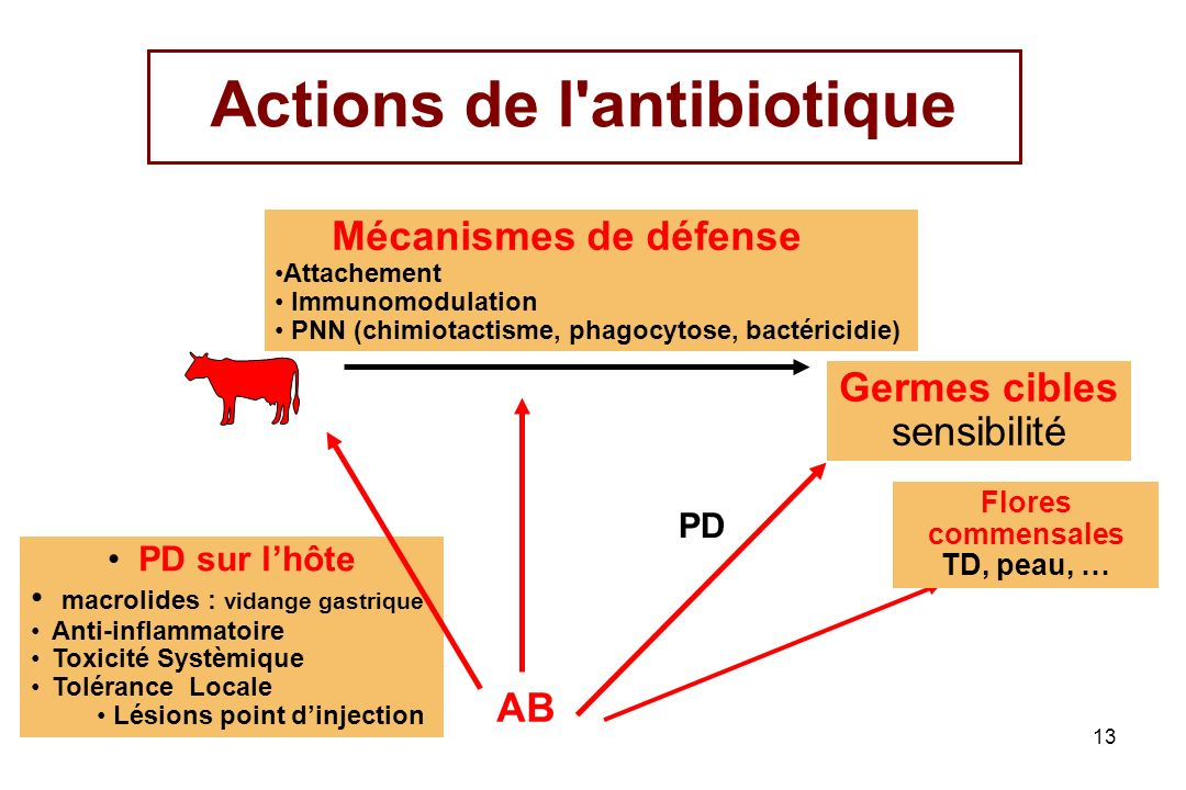 Actions de l antibiotique
