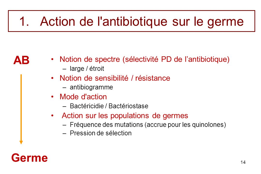 Action de l antibiotique sur le germe