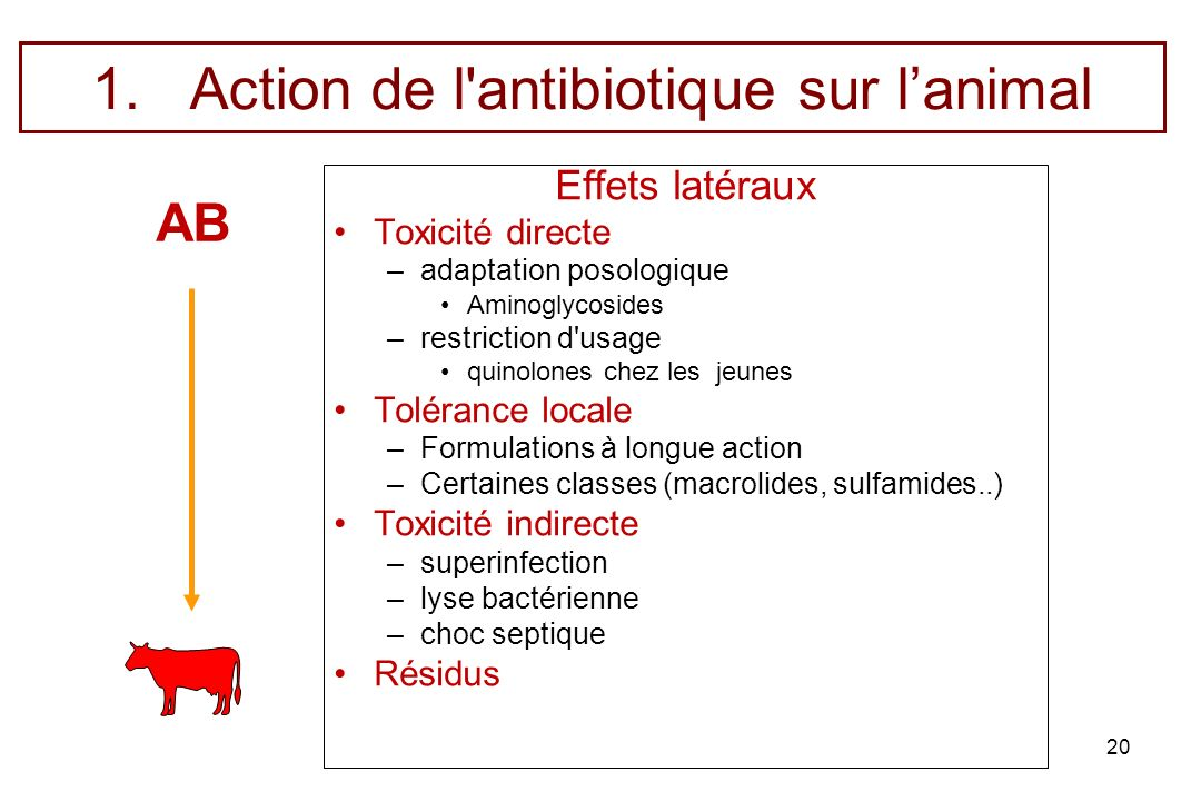 Action de l antibiotique sur l'animal